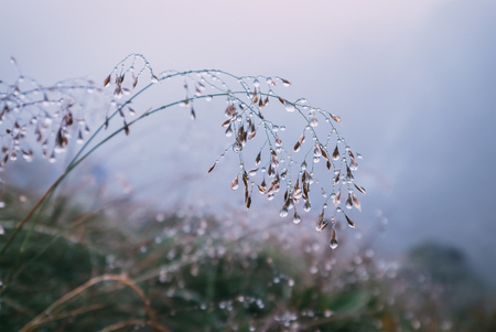 Stalk of grass in water drops