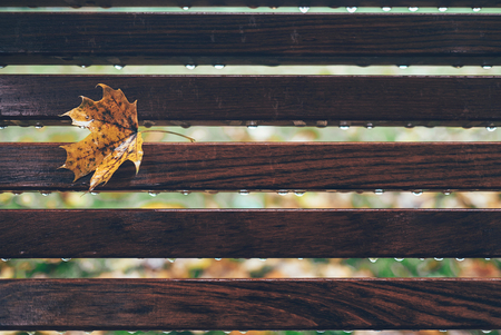 Rainy drops and yellow maple leaf are on wooden bench