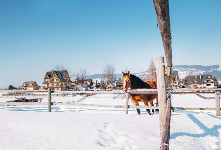 Mountain village winter landscape with red horse