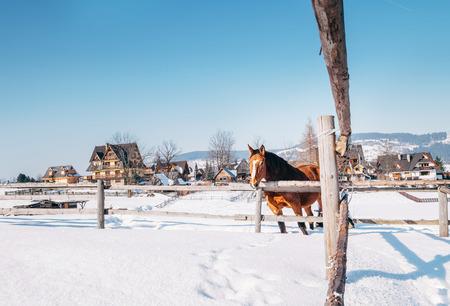 Paisagem de inverno de aldeia de montanha com cavalo vermelho Foto de archivo - 89477600