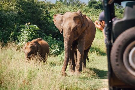 Elefants safari in National Nature Park Udawalawe in Sri Lanka Stock Photo
