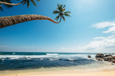 Ocean view with palm trees over the waves