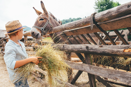 Boy helps on farm - feeds a donkey Foto de archivo - 102951265