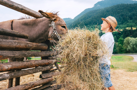 Summer in countryside: little boy helps on farm with animal Reklamní fotografie