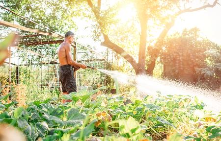 Farmer man watering his vegetable garden Imagens