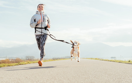 Canicross exercises. Female runs with his beagle dog and happy smiling. Autumn spring outdoor sport activity Zdjęcie Seryjne