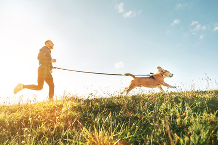 Canicross exercises. Man runs with his beagle dog. Outdoor sport activity with pet 免版税图像