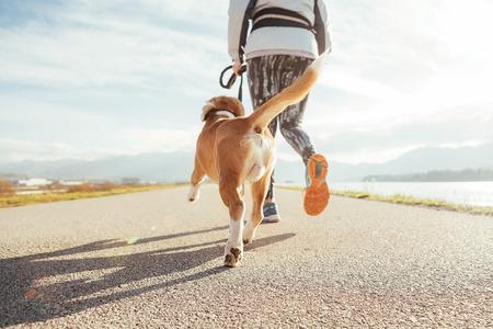 Hembra comenzando la mañana trotando con su perro beagle por la pista de asfalto. Ejercicios de Canicross por la mañana soleada y brillante. Cerrar imagen de piernas
