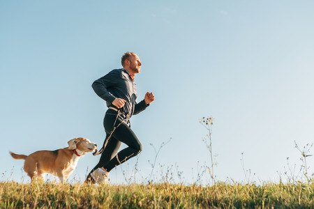 Sport activity with pet. Canicross exercises. Man runs with his beagle dog Standard-Bild - 114529890