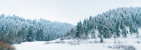 Snowy pine forest panorama at High Tatra mountains, Slovakia