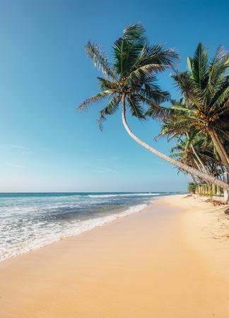 Tropical island beach white sandy classic view ocean vertical view Stock Photo - 116332874