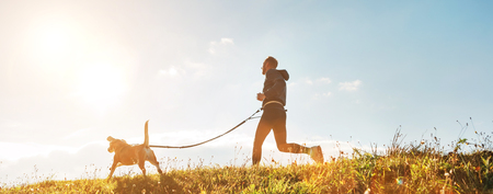 Canicross exercises. Man runs with his beagle dog at sunny morning Stockfoto