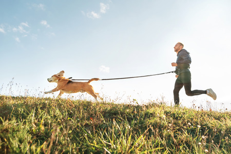 Canicross exercises. Man runs with his beagle dog. Outdoor sport activity with pet Standard-Bild - 123406970