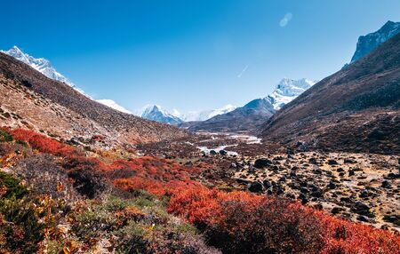 """Tundra"" zone in Hymalayas. Kingdom of Shrubs and mosses near Dingboche settlement in Sagarmatha National Park, Nepal."