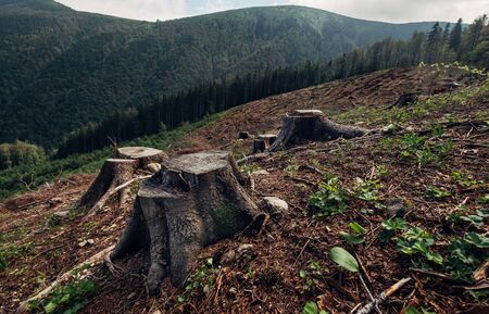 Stumps field as a result of Clearcutting process in forestry industry in Slovak Republic. Save Nature ecology concept image.