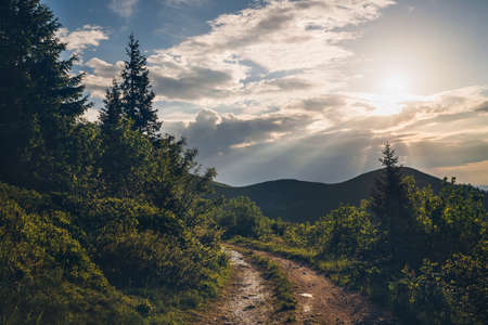 Dirty country mountain road surrounded spruces trees view with evening sun rays light. Traveling in Europe in Slovak Republic, Mala Fatra mountains. 免版税图像