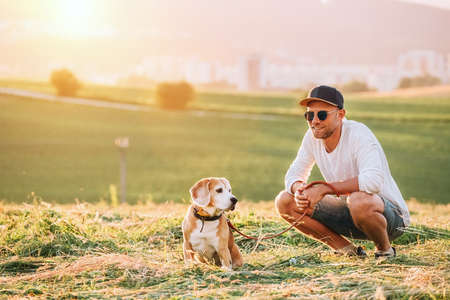 Middle-aged man dressed light white sweater and jeans shorts walking with his beagle dog during sunset evening time. They walking on the just mowing grass meadow. Pets as family members concept image.