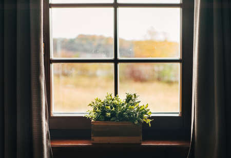 Green houseplants in the pot on the windowsill. Country house vintage window with curtains view. Banque d'images