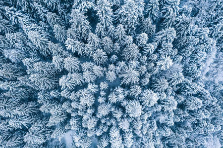 Aerial top view drone shot of the pine and spruce trees forest covered with snow in the Tatra Mountains in Slovakia. Beauty in nature and ecology concept image. 免版税图像