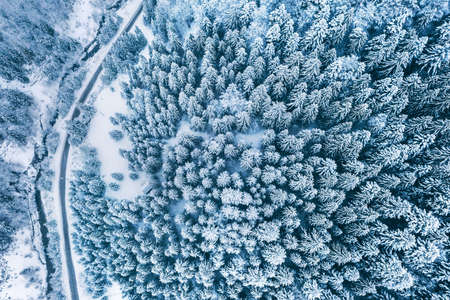 Aerial top view drone shot of the pine and spruce trees forest covered with snow in the Tatra Mountains in Slovakia with a countryside rural road. Transportation and ecology concept image.