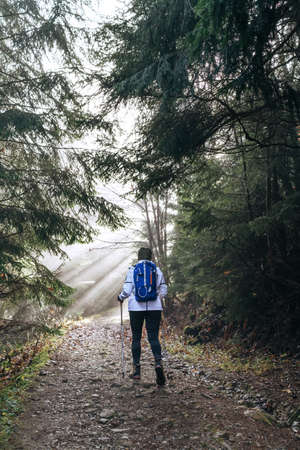 Woman with backpack have a forest walk using a trekking poles. She walking by the forest path with trees tunnel and magical sun beams shinning through the branches. Active people concept image. Standard-Bild