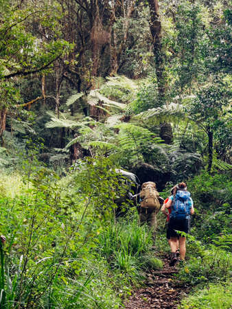 Backpackers entering a deep jungle while they have hiking walk on the Umbwe route in the forest to Kilimanjaro mountain. Active climbing people and traveling concept. 免版税图像