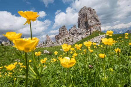 Fresh green grass and yellow flowers landscape photo with rock formation Cinque Torri, Cinque Torri di Averau peaks 2361m in Belluno province, northern Italy.