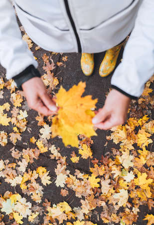 Women's palms holding a little bouquet of yellow maple leaves while she walking in an autumn city park. Beauty in nature concept image. 免版税图像