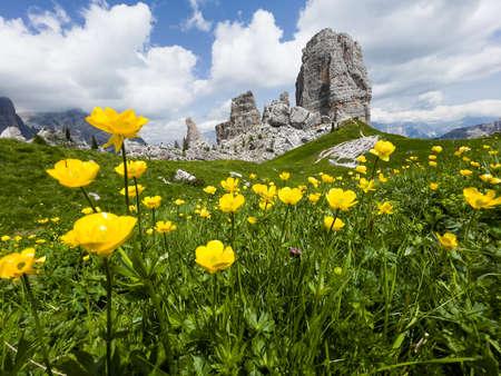 Fresh green grass and yellow flowers landscape photo with rock formation Cinque Torri, Cinque Torri di Averau peaks 2361m in Belluno province, northern Italy. . 免版税图像