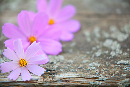 wooden background with beautiful flowers