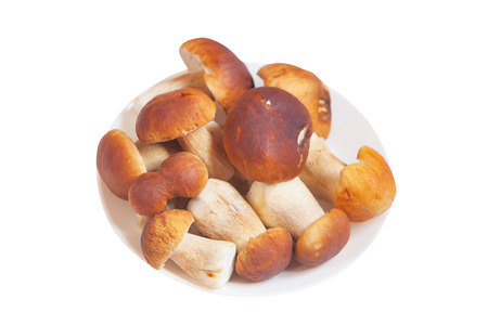 porcini: Edible forest mushrooms porcini on a white background