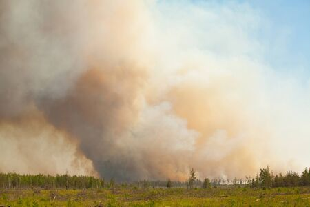 wildfire: wild wildfire summer without people in the forest Stock Photo