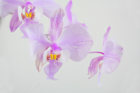 Beautiful rare orchid in a pot on a white background Standard-Bild