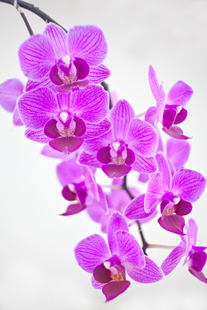 Beautiful rare orchid in a pot on a white background Stock Photo