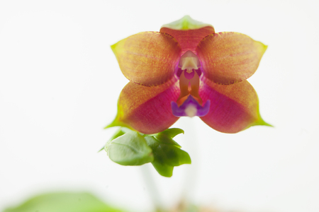 Beautiful rare orchid in a pot on a white background Banco de Imagens