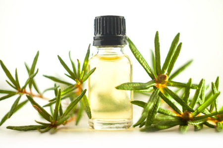 Labrador tea essential oil in a beautiful bottle on the White background