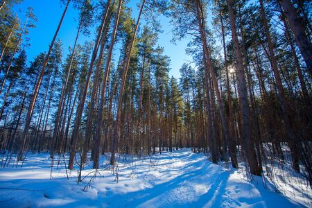beautiful winter forest on a sunny day Banque d'images - 129374089