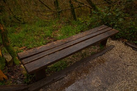 wooden bench in  public park in spring at sunset Banque d'images - 129374153