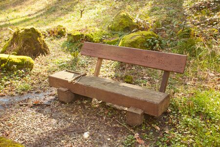 wooden bench in  public park in spring at sunset