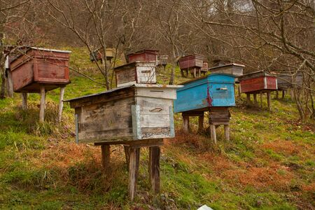 bee passeka on a village farm in spring Banque d'images - 129374551
