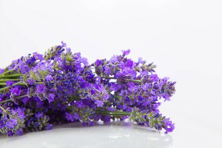beautiful bouquet of blue lavender on a white background Standard-Bild