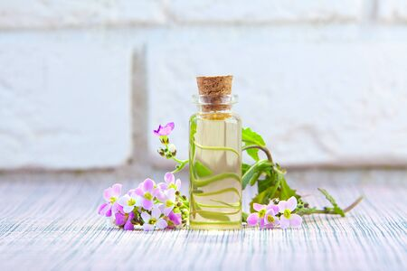 Essential oil of a Arabis flower on a White background in a beautiful bottle Imagens