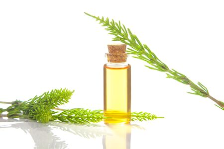 horsetai essential oil in a beautiful bottle on the White background