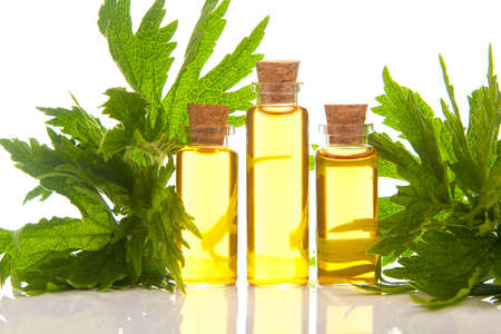 motherwort essential oil in a beautiful bottle on the White background