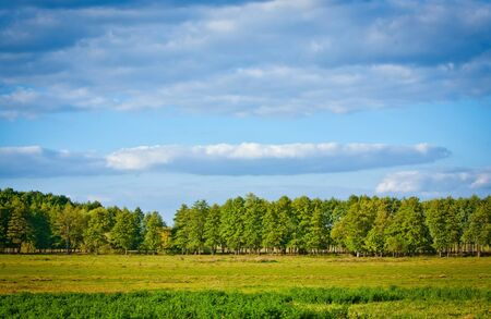 meadow with lush grass, forest and sky with clouds photo