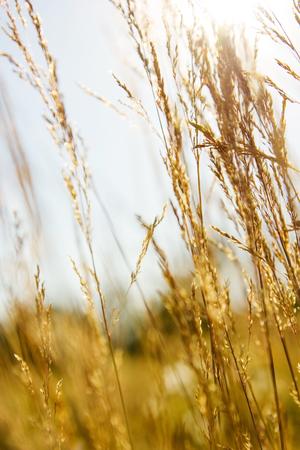 herbs wild: hierbas silvestres en un lanzamiento descontrolado