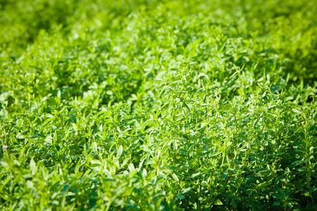 green vegetation: Young juicy bright green vegetation Stock Photo