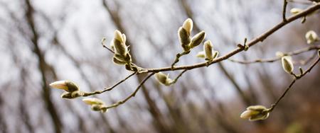 lush foliage: bright spring flowers and lush foliage