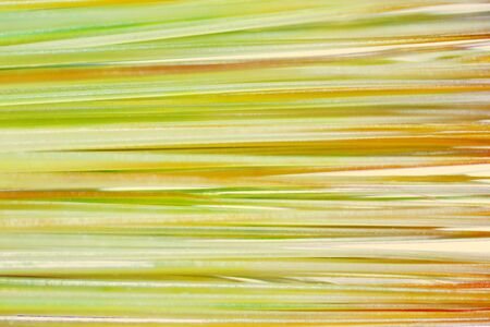 tuft: abstract background, a tuft of hair under the microscope