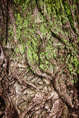 big cork: bark of a large tree, covered with green moss